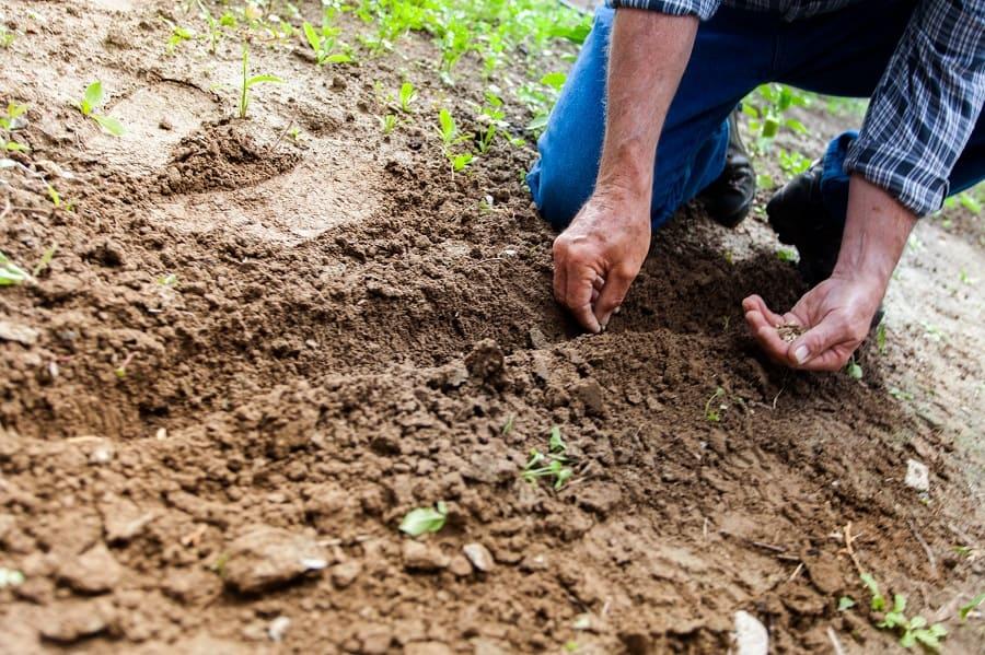 טיפוח הגינה בבתים שנבנו בבניה קלה
